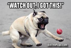 Watch out, I got this - Join the Pugs