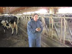 SD Adopt a Farmer Boadwine Farms part 1 Heidi Selken explains what dairy cows eat and where they live on the dairy farm near Baltic. Heidi is one of several SD farmers being adopted by students across the state. This is the first video of the series for the 2012-2013 school year.