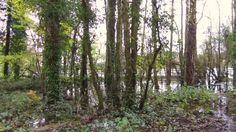 Flood @ Knockatrina Wood Durrow