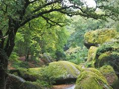 Brittany: fairies, dwarves and legends in the Huelgoat forest Europe Destinations, Beach Trip, Vacation Trips, Vacation Travel, Family Vacations, Le Canal Du Midi, Photo Bretagne, Portugal Holidays, Uk Beaches