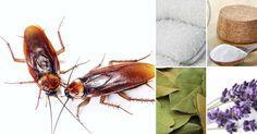Ako zatočiť so švábmi a zabrániť ich návratu bez použitia chemikálií Home Remedies Beauty, Natural Remedies, Natural Solutions, Home Made Soap, Go Green, Clean House, Cleaning Hacks, Helpful Hints, Diy And Crafts