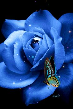 Animation Blue rose with a butterfly that flaps its wings, the author SIFCO blue rose with a butterfly that flaps its wings, the author Gif Animé, Animated Gif, Beautiful Butterflies, Beautiful Roses, Exotic Flowers, Blue Flowers, Gif Rose, Rosas Gif, Butterfly Gif