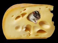I have some fur in my cheese.