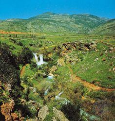 Golan Heights #greenery #natural