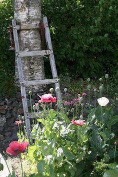 Lovely idea—let clematis and climbing roses grow up an old ladder. Pink Garden, Dream Garden, Garden Art, Garden Ideas, Garden Club, Beautiful Gardens, Beautiful Flowers, Garden Ladder, Old Ladder