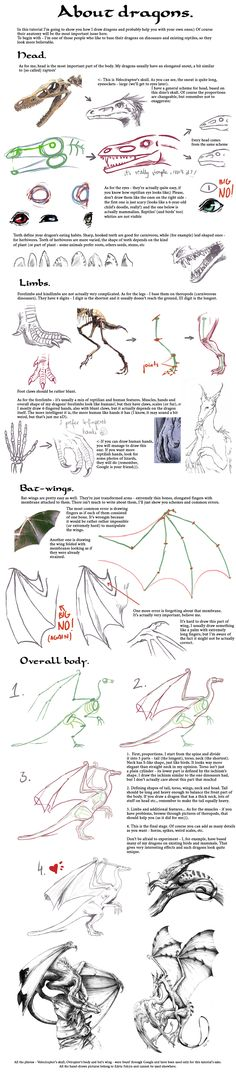 Tutorial: Dragons by =Sheil || CHARACTER DESIGN REFERENCES |