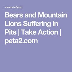 Bears and Mountain Lions Suffering in Pits | Take Action | peta2.com