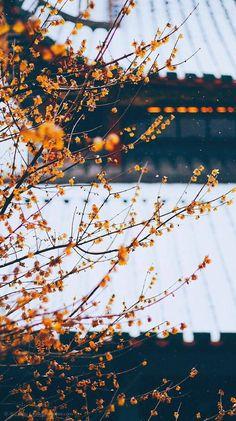 Aesthetic Pastel Wallpaper, Scenery Wallpaper, Aesthetic Backgrounds, Nature Wallpaper, Wallpaper Backgrounds, Aesthetic Wallpapers, Nature Aesthetic, Flower Aesthetic, Creative Photography