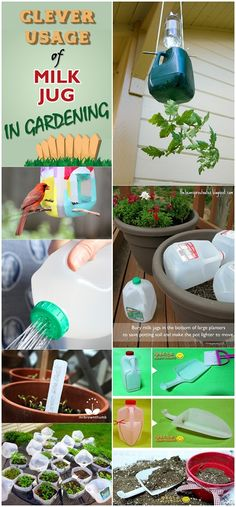 Clean the milk jug. Cut holes in the two sides opposite the handle (see the big circles on the photo) for the birds to stick there little heads in. Then poke two holes to push a stick or dowel rod . Growing Tomatoes, Growing Plants, Baby Tomatoes, Garden Crafts, Garden Projects, Container Gardening, Gardening Tips, Milk Jug Crafts, Pot Lights