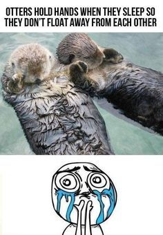 Otters hold hands when they sleep so they don't float away from each other
