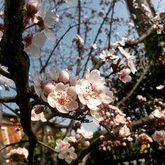 #flower #garden #beauty #power #flowerpower #nature #instanature #smell #spring #instaspring #bees #skyporn #white #fragile #trees #pruno #novellaorchidea #novella #orchidea #raccontierotici #racconti #ebook #ricardo #tronconi #eroticnovel #home