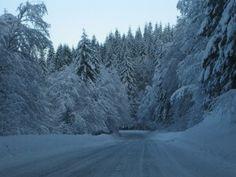 11 Trunk Essentials for Winter Preparedness - Food Storage and Survival
