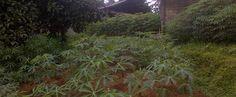 Di jual tanah di cijayanti bogor tanah bagus daerah pegunungan