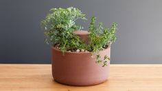 10 Self-Sustaining Planters That Make Gardening Easy via Brit + Co.