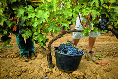 Wine Land Provence – Extreme Outdoor Adventure & Tourism For Spring Road Trip Planner, French Countryside, Paris Hotels, Wine Cellar, Provence, Wines, Garden Tools, Tourism, Adventure