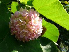 Beautiful pink bloom hiding beneath the roadside foliage.