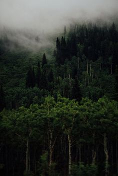 Little Cottonwood Canyon   Flickr - Photo Sharing!