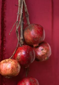 pomegranites against red wall