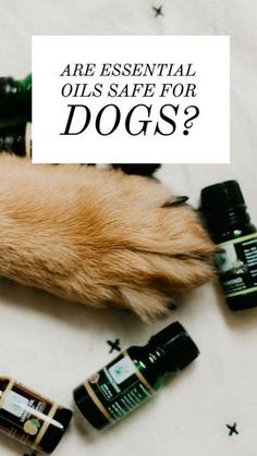 Are Essential Oils Safe for Dogs? | House Fur