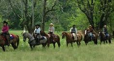 Go horseback riding in Cades Cove.   THis was so much fun when we did it before kids!!!