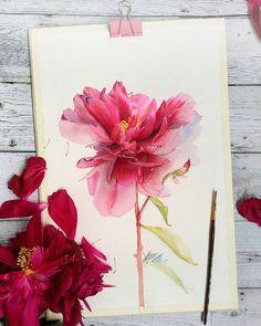Евгения Бабичева (Щеглова) (@evgenyasheglova) в Instagram: #Peony #peonies #flowers #art #watercolor #painting #paint #Купить #Картина #pink #watercolour #draw #drawing #flower #flowers #цветы #watercolor #watercolour #aquarelle #waterblog #worldofartists #drawing #painting #art #artist #artshelp #artgallery #artweinspire #topcreator #inspiringwatercolors #inspiration #flowers #botanical #botanicalart #illustration #акварель #вдохновение #иллюстрация #pink