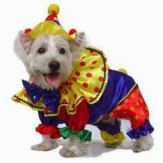 Dicas para Pet: Fantasias para cachorros