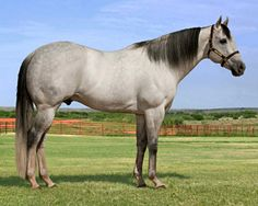 AQHA quarter horse racing stallion, Eyesa Special.
