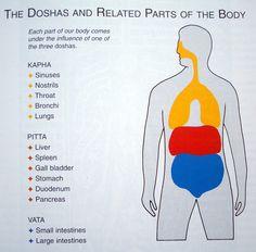 Ayurveda Doshas - Related Parts of The Body http://www.foodpyramid.com/ayurveda/