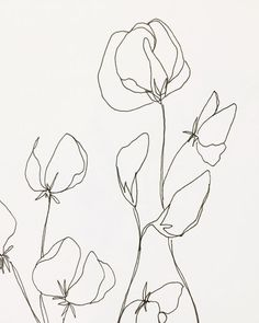 Love this modern floral illustration in a sketched style of fine art. - Love this modern floral illustration in a sketched style of fine art. Art And Illustration, Floral Illustrations, Botanical Illustration, Botanical Drawings, Art Inspo, Inspiration Art, Art Sketches, Art Drawings, Flower Sketches
