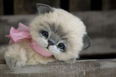 ♥ ♥ Such a sweet face! ♥ ♥                  Kitten by Three O'Clock Bears Artist Jenny Johnson.