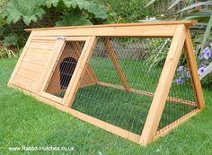 The Guinea-Pig Ark Run
