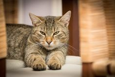 In our Newsletter today, we show you how to care for your aging cat.