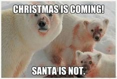 Christmas is coming funny polar bear meme - PMSLweb