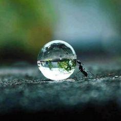 Formiche in casa? Allontaniamole rispettando la loro vita. Oltre ad uccidere questi piccoli essere viventi, gli insetticidi sono nocivi per l'ambiente. Come invitare le formiche ad andare a vivere in un altro posto? Ecco qualche rimedio green.