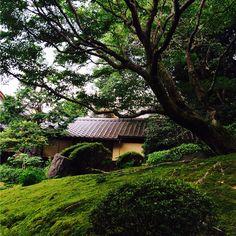 京都。詩仙堂。迴游式庭園極美極美。