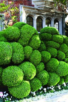 cloud pruning - Google Search