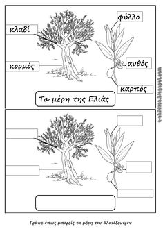 Los Niños: ΤΑ ΜΕΡΗ ΤΟΥ ΕΛΑΙΟΔΕΝΤΡΟΥ Preschool Education, Preschool Kindergarten, Autumn Activities, Activities For Kids, Sequencing Pictures, Greek Language, Greek Alphabet, Environmental Education, School Staff
