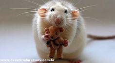 Blog do rato - Associação Brasileira de Franchising: Dica TSERV: Existe Raticida Pó?