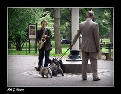 Jazz en Central Park