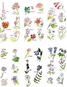 common flowers and their meanings