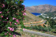 Blue Aegean and pink oleanders. Paradise On Earth, Greek Islands, Countries Of The World, Amazing Nature, Nice View, More Photos, Greece, Most Beautiful, Explore