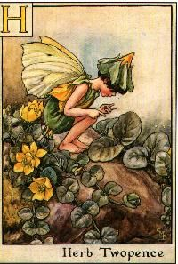C M Barker fairy art, the alphabet fairies!