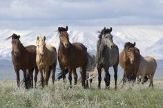 Horses against the Altai...: Photo by Photographer Erik Thomson - photo.net