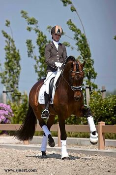 how to train a dressage horse