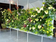 Plants On Walls Vertical Gardens: Floating Vertical Garden