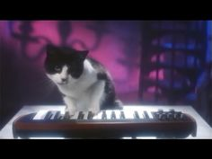 The Latest 'Temptations' Commercial Is Straight out of the 80's and Stars a Feline Cover Band - Cheezburger