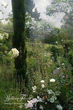 Brumes, nepetas , roses blanches et cypres totem- Photo © Hélène Flont‿ ◕✿: jardin