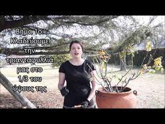 Το κλάδεμα της τριανταφυλλιάς // Ο μαγικός κήπος - YouTube Mens Sunglasses, Garden, Youtube, Flowers, Man Sunglasses, Lawn And Garden, Florals, Gardens, Outdoor