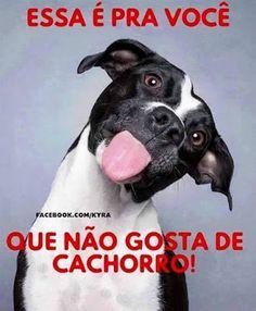 Imagem e Frases Facebook: Não gosta de cachorro...