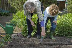 Starting an Organic Garden - How to Make a New Organic Garden